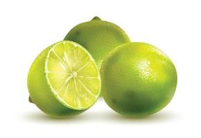 Lime closeup isolated on white background vector
