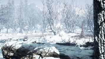 Seitenansicht der Winterwaldseite video