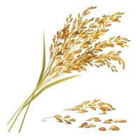 Ilustración de vector de ilustración de grano de arroz
