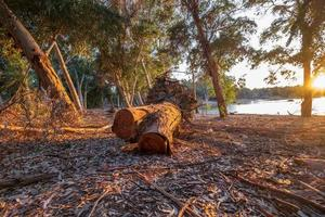 Cortar la corteza de los árboles en el lago Athalassa Chipre bañado por la cálida luz de la tarde foto