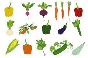 verduras conjunto simple pimiento rábano remolacha zanahoria nabo tomate berenjena apio maíz lechuga pepino vector