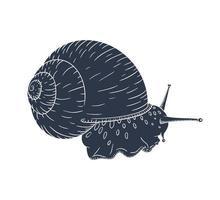 Hand Drawn Garden Snail Silhouette Vector Illustration in Vintage Style