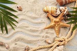 conchas y estrellas de mar en la arena. foto
