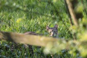 Cat behind a fence photo