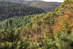 vista sobre un valle arbolado foto