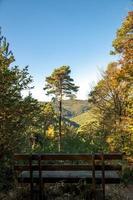 banco con vista al árbol foto