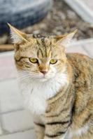 Portrait of a cat photo
