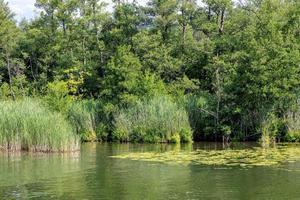 orilla verde boscosa de un lago con nenúfares y juncos foto