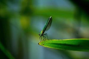 Be free, fly like a dragonfly photo