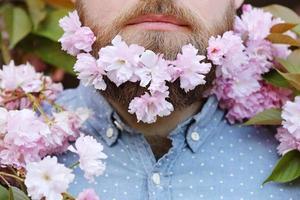 Bearded male's face peeking out of bloom of sakura photo