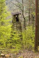 asiento alto de cazadores en un bosque foto