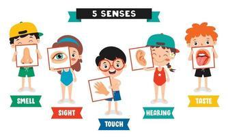 concepto de cinco sentidos con órganos humanos vector