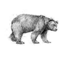 Portrait of a brown bear on white background hand drawn sketch Vector illustration of paints