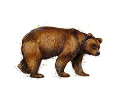 Portrait of a brown bear from a splash of watercolor hand drawn sketch Vector illustration of paints