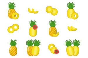 Set of illustrations with pineapple exotic fruits flowers and leaves vector