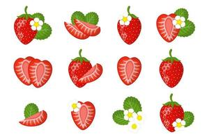 Set of illustrations with strawberry exotic fruits flowers and leaves vector