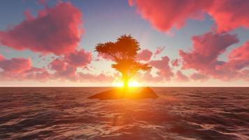 la vista de los árboles que crecen en islas en medio del mar durante la tarde video