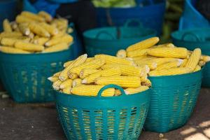 Fresh yellow corn in the basket Food and Vegetable Production photo