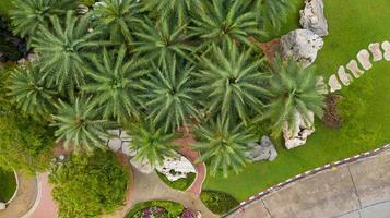 vista aérea del hermoso jardín verde foto