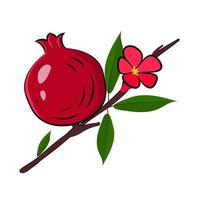 Pomegranate branch with fruit flower and leaves vector