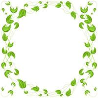 circle of green leaves on a branch  border  isolated on white background vector
