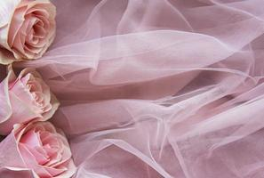 Pink roses as a border photo
