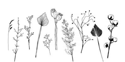Set of minimalistic dried plants flowers and leaves Scandinavian hygge vector elements of interior