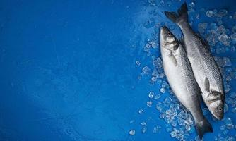 Seabass fish on ice on blue color background top view photo