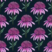 Hand drawn botanical seamless floral pattern with coneflower stamp vector