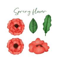 Collection of hand drawn watercolor spring flowers vector