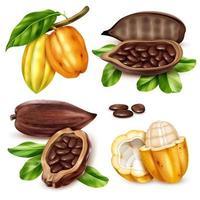 conjunto de iconos de cacao realista ilustración vectorial vector