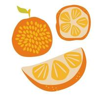 Juicy ripe orange half and whole delicious fruit with seeds Design for textiles labels posters Vector hand draw illustration isolated on white background