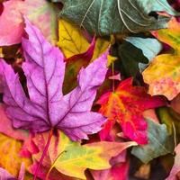 Square background of autumn leaves photo