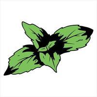 hierba de menta para té vector