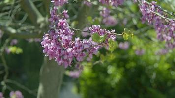 belles fleurs de printemps dans la nature video