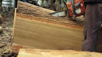 An arborist cutting the log with a chainsaw, with audio video