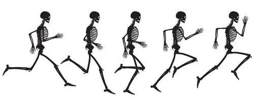 Vista de silueta del ciclo de ejecución del dibujo vectorial de esqueleto humano vector