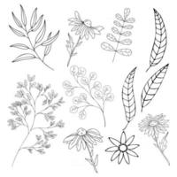 Set of plants and flowers of various types in the doodling technique vector