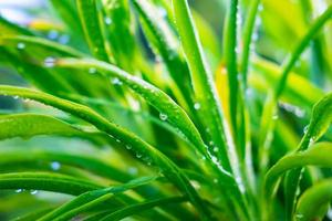 Water droplets on the leaves during the rainy season photo