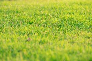 Closeup crowd of grass growing on the land photo