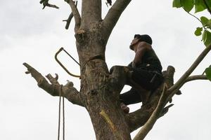 Portrait of arborist holding on the tree with his hand with a clear sky background photo