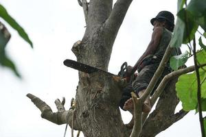 Portrait of arborist holding on the tree with a chainsaw with a clear sky background. photo