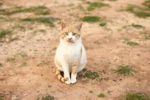 Portrait of a cute red and white cat outdoors photo