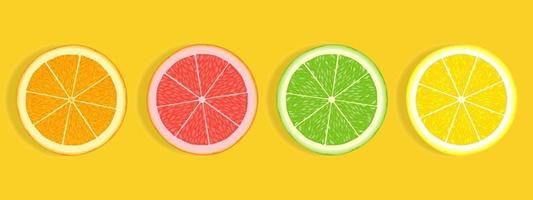 Citrus fruit slices of orange grapefruit lime and lemon isolated on white background vector