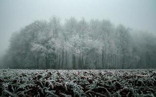 Frozen trees in winter photo