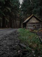 cabaña en el bosque foto