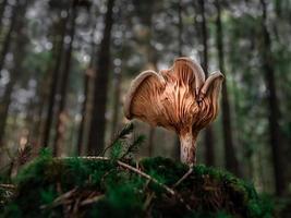 setas en el bosque foto