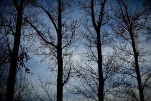 grupo de árboles desnudos en invierno foto