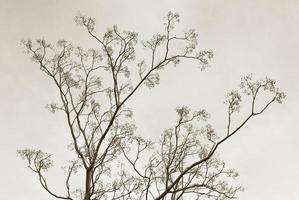Bare tree silhouette in black and white photo