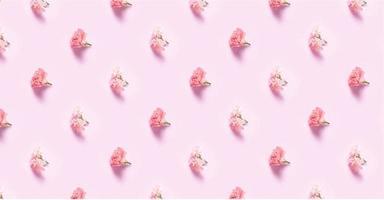 Carnation flowers with minimalist photo